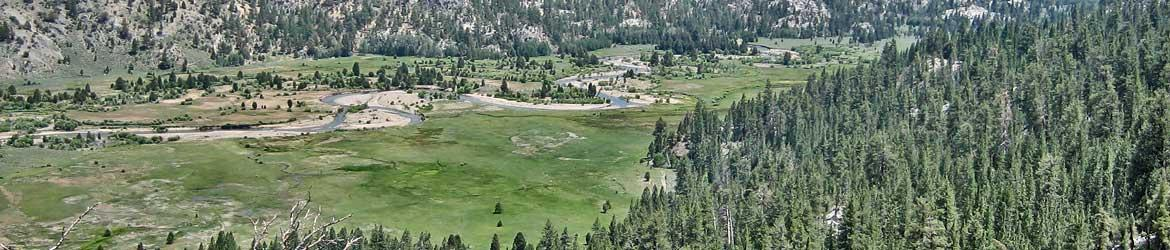 Levitt Meadows